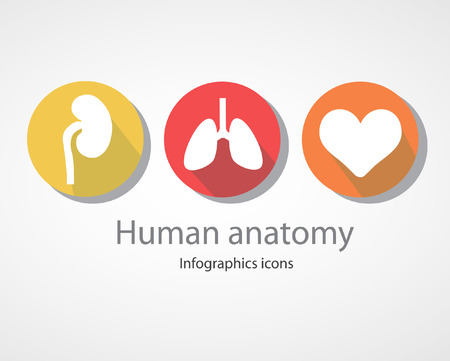 Human anatomy. Infographics icons.EPS 10 file.
