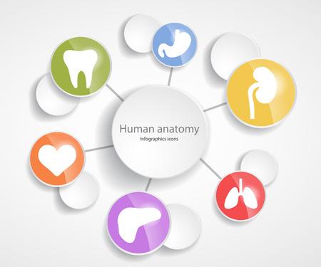 Human anatomy. Infographic glossy icons.EPS 10 file.