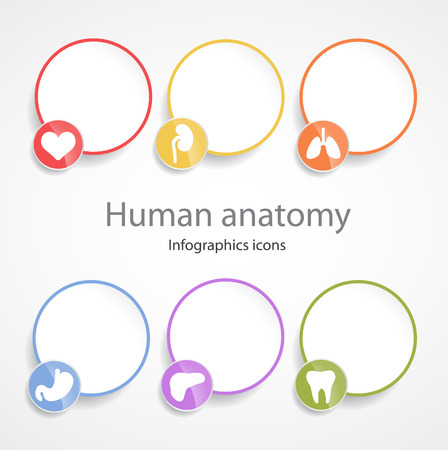 Human anatomy. Infographic icons.EPS 10 file.