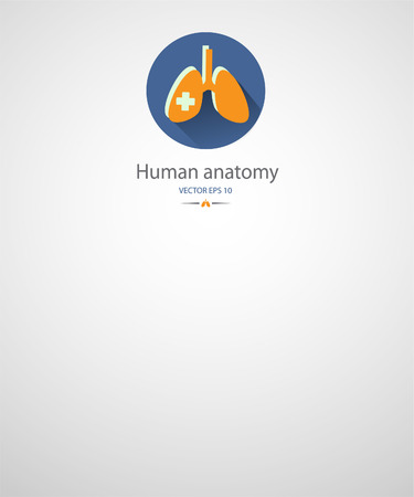 Human anatomy background.Medical care.Lungs.