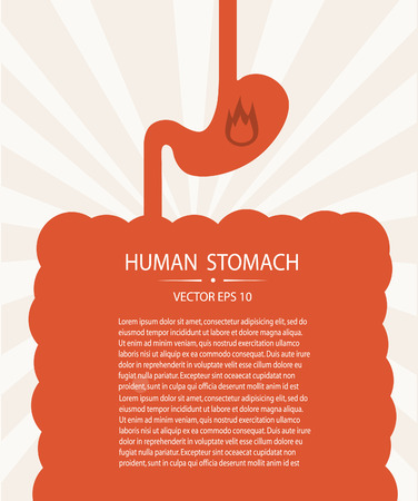pylorus: Human stomach.