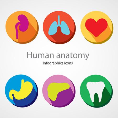 Human anatomy. Infographics icons. file. Ilustração