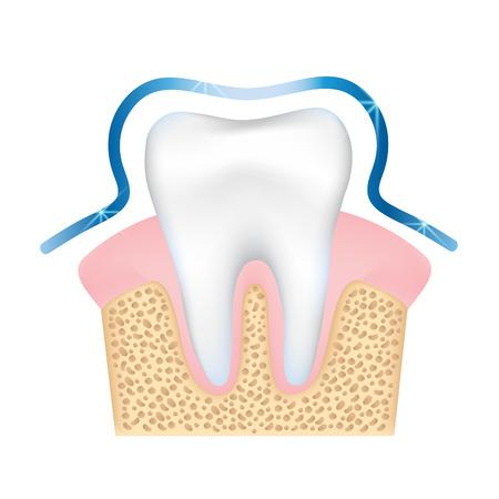 dental pulp: Illustration of dental protecting.EPS 10 file.