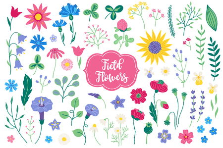 Set of field flowers - tulip, bellflower, clover, knapweed, sunflower, poppy, lavender, bindweed, viola, branches, leaves