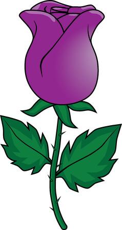 Purple rose drawing Vektorové ilustrace