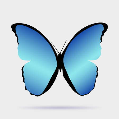 Butterfly Morpho didius realistic design Illustration