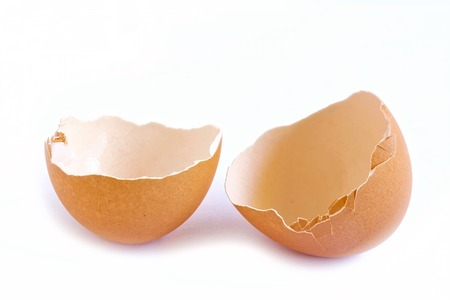 thin shell: Egg Shell on White Background