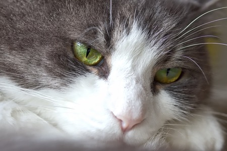dull: Dull Looking Cat