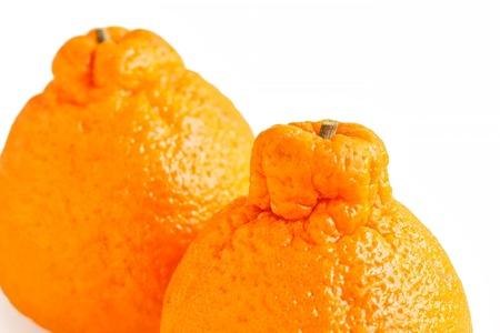 Fresh Sumo Mandarin on White Background Archivio Fotografico