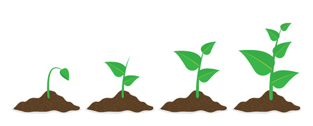 Phases plant growing. Planting tree infographic. Vector illustration in flat style