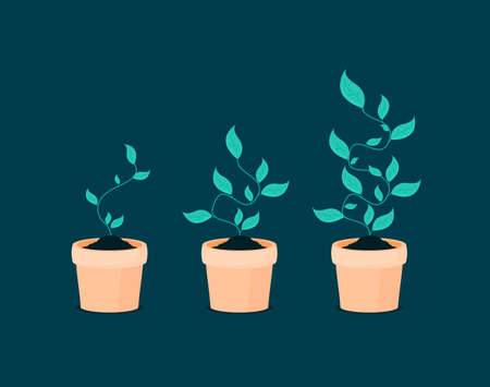 Phases plant growing. Vector illustration in flat style Ilustrace