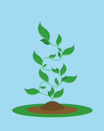 Phases plant growing. Vector illustration in flat style Stock Illustratie