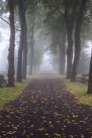 heartsickness: Alley in a morning fog in a graveyard