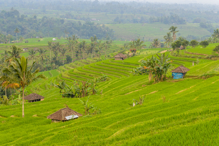 famous rice terraces of Jatiluwih, Bali, Indonesia Stock Photo