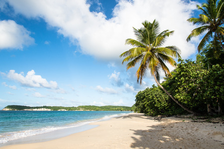 マリー ・ ガラント島、グアドループに青緑色の水と熱帯のビーチ
