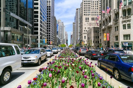 and the magnificent: The Magnificent Mile in Chicago with Tulips