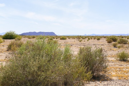 Shrubs growing on arid ground in the Sonoran Desert, Arizona, USA, with a mountain range in the back.