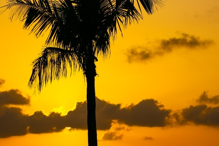 The tangerine sunset sky with some clouds above the Key West Bight. Stock Photo