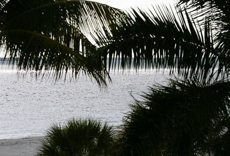 myers: View of the Gulf of Mexico and the beach through palm leaves in Fort Myers Beach.