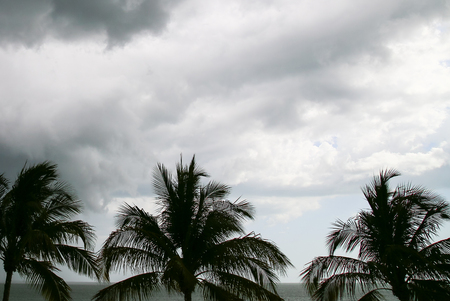 myers: Thunderclouds in the sky above the Gulf of Mexico in Fort Myers Beach, in the foreground some palm trees. Stock Photo