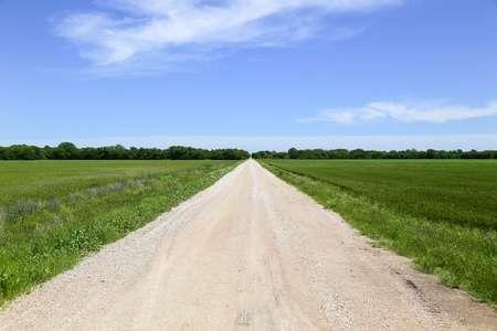 great plains: Farm road near Halstead in Kansas, USA, with green fileds or grassland to each side.