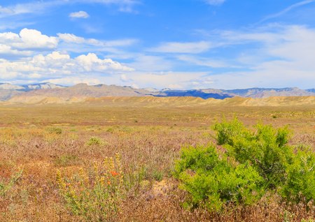 The North Fruita Desert near Loma in Colorado with blooming wildflowers in the dry grass and mountains in the back.