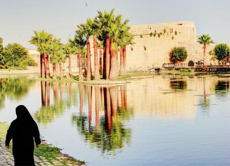 Palm trees in Fez, Morocco Reklamní fotografie