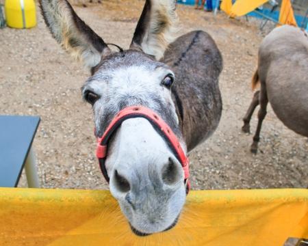 funny donkey: Funny donkey  Stock Photo