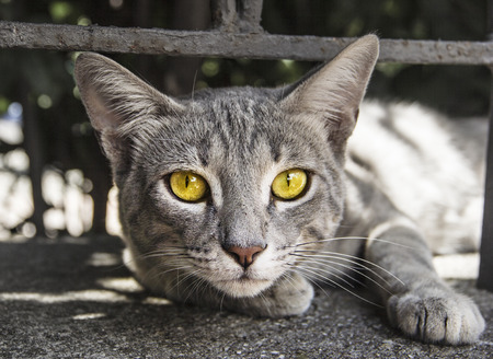 Portrait of yellow eyed cat