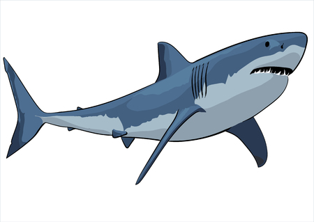 man eater: A great white shark with open mouth Illustration