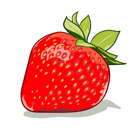 picking fruit: Ripe red strawberries on a white background vector illustration