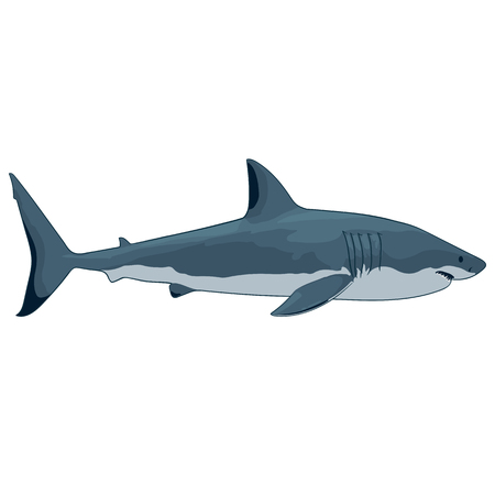 guadeloupe: great white shark on a white background isolated
