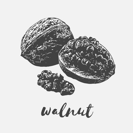 walnut healthy organic food rich in vitamins