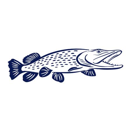 scandinavia: pike fish illustration