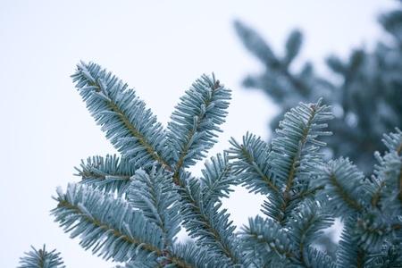 the rime on trees 版權商用圖片