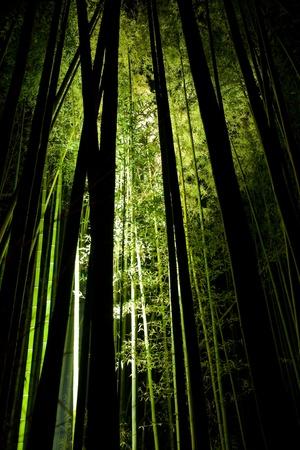 bamboo  Kyoto