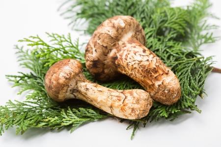 Matsutake mushrooms on the White background