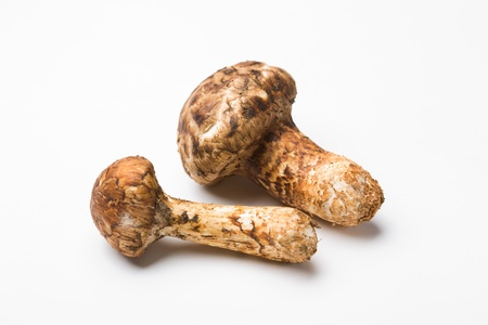 Matsutake mushrooms on the White background