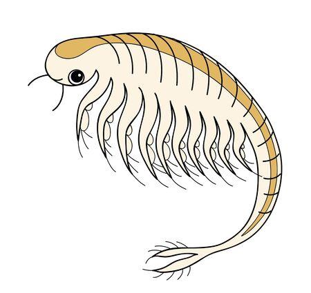 Sea Monkey Artemia Character Illustration Reklamní fotografie
