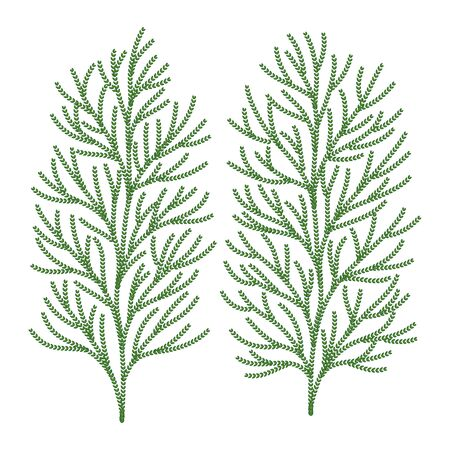 Hiba-Baum-Blatt-Vektor-Illustration