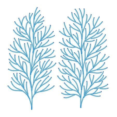 Hiba Tree Leaf Vector Illustration