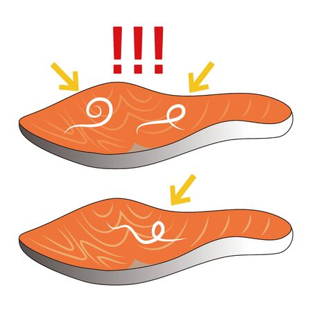Parasite Anisakis and Salmon Fillet Vector Illustration  イラスト・ベクター素材