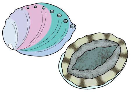 Abalone Illustration Clip Art