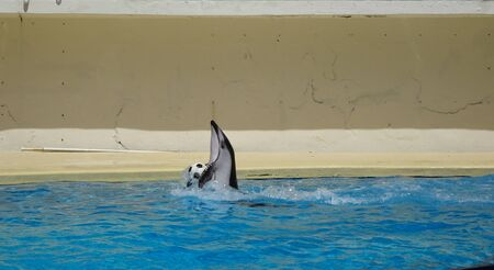 Dolphin carrying a soccer ball in his arms Photo
