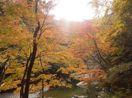 Autumn leaves, Sandankyo, Hiroshima Prefecture
