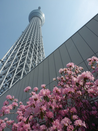 Tokyo Sky Tree and Cherry Blossoms