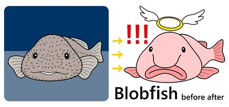 Blobfish Nuudokajika Before After Set Vector Illustration