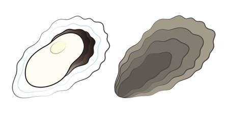 Oyster Set of Seas and Seashells Illustrated Vector