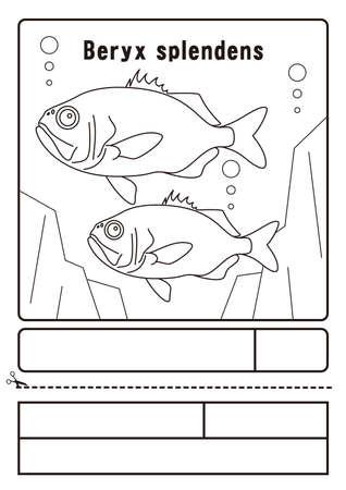 Kimmedai Beryx slendens Illustration coloring paper Kinmedai Beryx slendens illustration. Coloring. Application form.