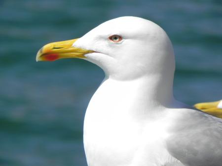 splendide: Seagull Splendid